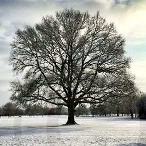 Bosworth Park Winter.jpg