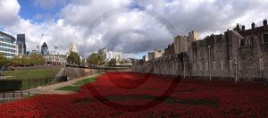 Tower Poppies 2015.jpg